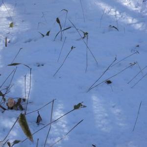 萩の里ではエゾシカが少ない?