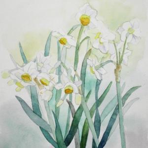 土手に咲く水仙を描く