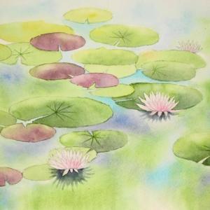 睡蓮の花を描く