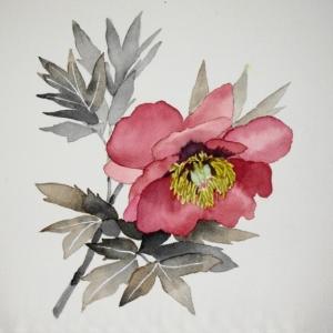 葉をセピア色にして牡丹の花を描く