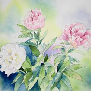 芍薬、牡丹、百合の花^^