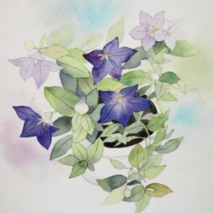 ベランダに咲く桔梗の花を描く。