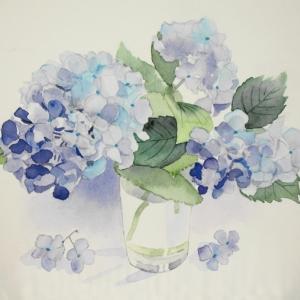 我が家に咲く紫陽花を描く^^
