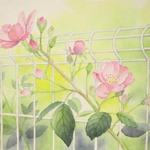 穏やかな秋の日に咲く薔薇^^
