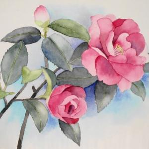 山茶花の花が咲く^^