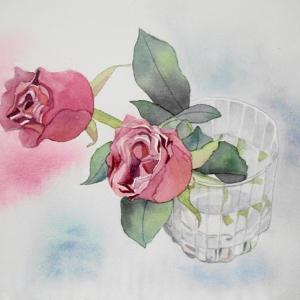 今年初めて描く薔薇の花。