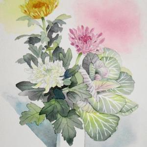 正月の花/菊と葉牡丹を描く^^