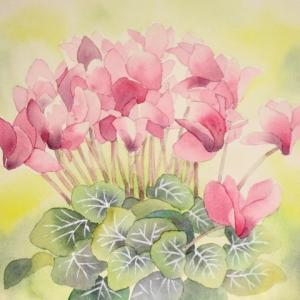 ピンク色したシクラメンを描く^^