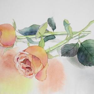オレンジ色のバラを描く^^