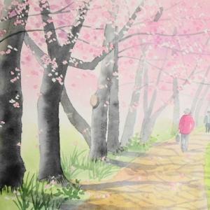 桜並木の遊歩道^^