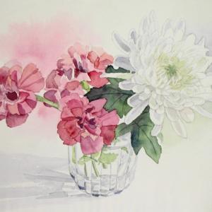 母の日に贈る紅い花、白い花^^