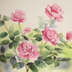 我が家の紅いバラを描く^^