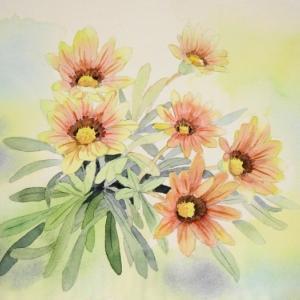 オレンジ色のガザニアの花を描く^^