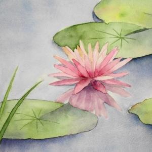 日本庭園の池に咲く睡蓮を描く^^