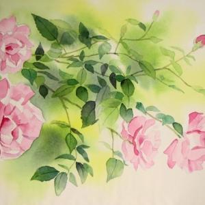 五月の薔薇を描く
