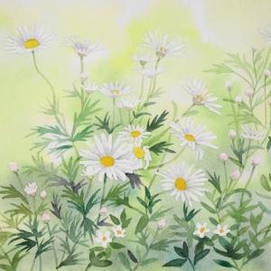 名の知らない白い花を描く