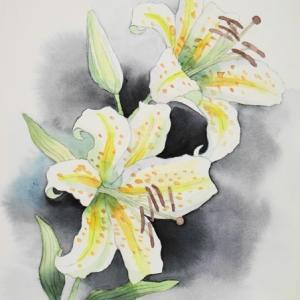 百合の花を描く^^