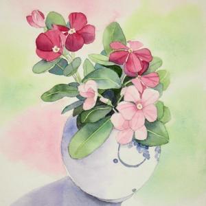 花瓶に挿した日日草を描く