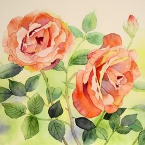 オレンジ色の薔薇を描く