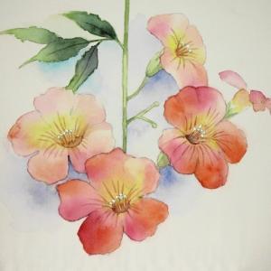 ノウゼンカズラの花を描く