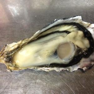 播州赤穂、坂越(さこし)の牡蠣