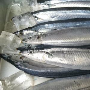 秋刀魚、苦いかしょっぱいか