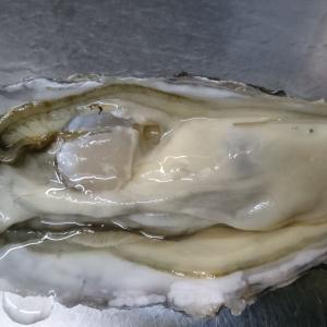 釧路の牡蠣がいい感じだよ(^o^)、ゴールデンウイーク中も営業します!