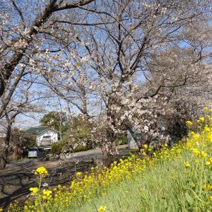 花桃の里を求めて秩父の山を登る