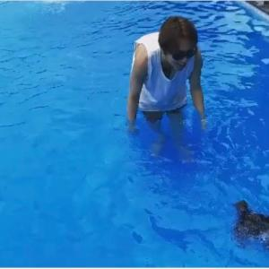 SJ★愛犬が初めて泳いだ日♪【ギュ-バンジージャンプ!!!】