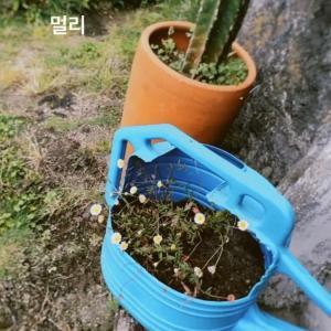 SJ★【早く教えて~♬ サポート認証!ギュリック】