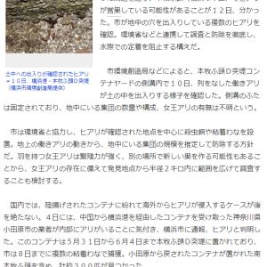強毒「ヒアリ」横浜港で営巣か