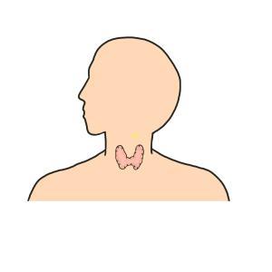 甲状腺食事