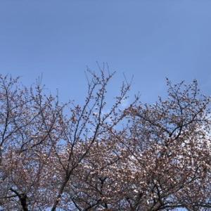 咲き始めてから…。