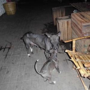 ミャンマーの子犬の写真とミャンマー行く際に必要な薬