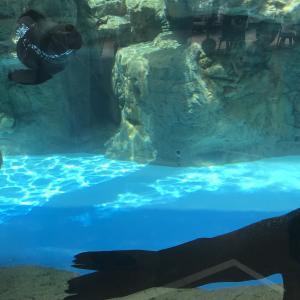 8年ぶりの京都水族館