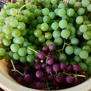 葡萄の季節