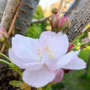 春のお花競演