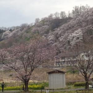「貫前神社の桜と稲號塔」53.95km