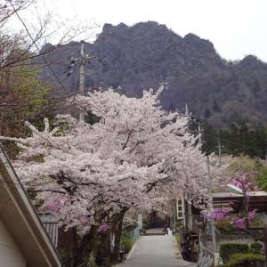「妙義の桜と・・・」88.08km