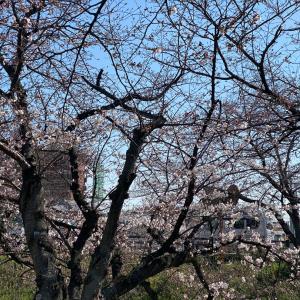 高田川芝桜化計画