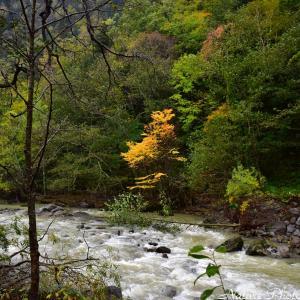 ●発見、秋!