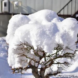 ●2月は大雪