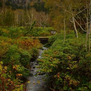 ●秋の小川