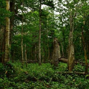 ●ノルウェイの森