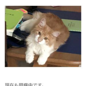 【FIP難病の猫ご支援のお願い】至急