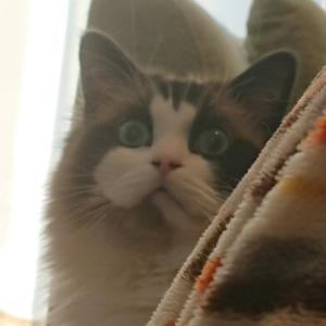 猫とのまったり週末
