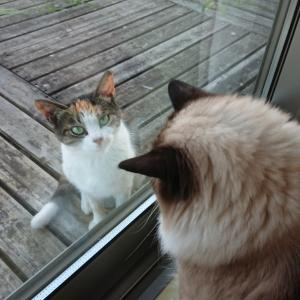 三毛猫の すずちゃん