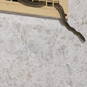 ♪お風呂場にヘビがーーーっ!!♪