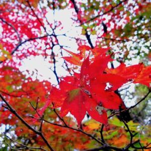自然の家紅葉情報!