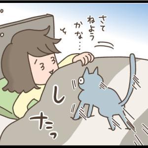 ツンデレがちょうどいい猫